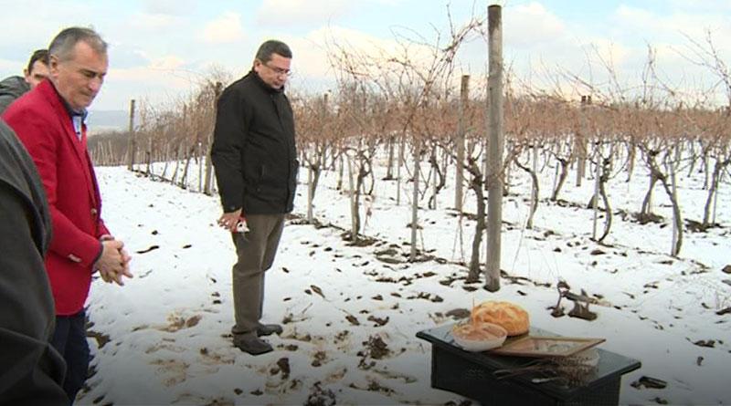 Zeočki vinogradi - Sveti Trifun