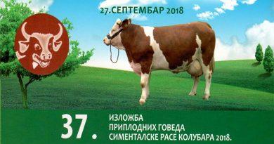 37. Izložba priplodnih goveda simentalske rase Kolubara 2018.