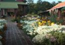 Konkurs za najlepše dvorište Lazarevca