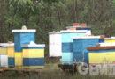 Zavšena jedna od najtežih pčelarskih godina