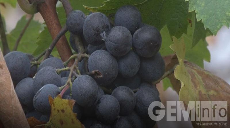 Vinarija grožđe