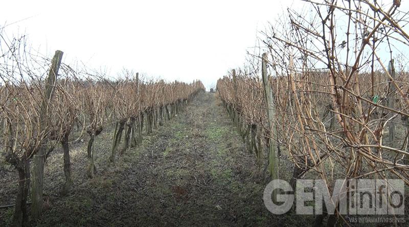 Zeočki vinogradi