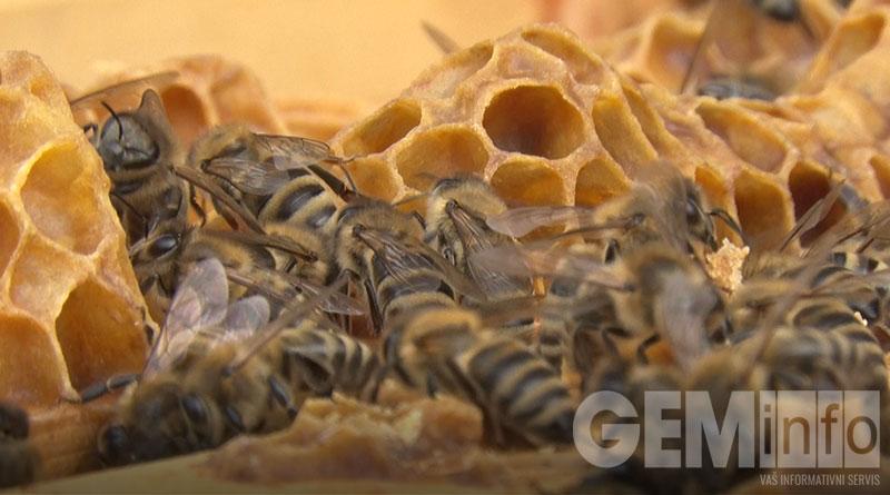 Pčelinja društva spremna za pašu