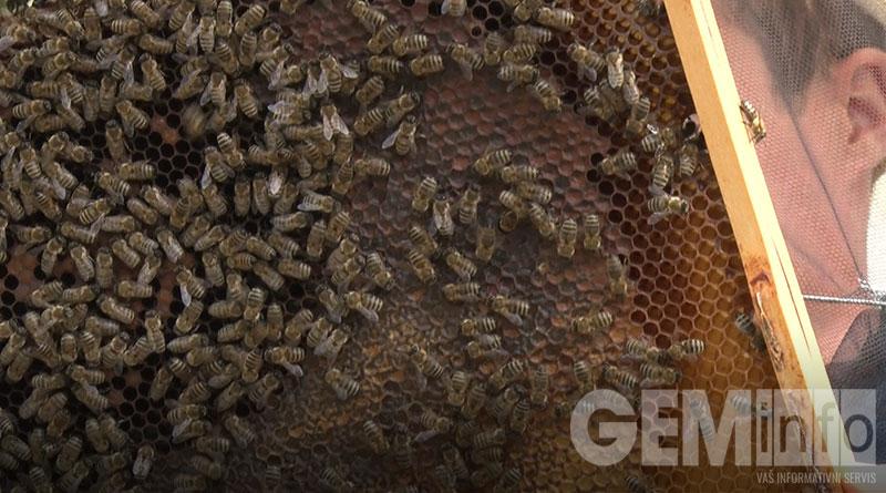 Pčele nestrpljivo čekaju pčelare