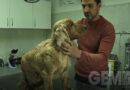 Kako spasiti kućne ljubimce od krpelja?