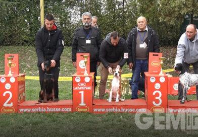 U Lazarevcu održana Nacionalna izložba pasa svih rasa